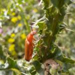insect Oostvaardersplassen